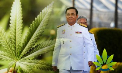New Government of Thailand is Set to Make Cannabis Policies One of Its Top Priorities