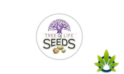 Tree of Life Seeds: Full-Spectrum CBD Oil Chocolate Bars Edibles and Soft Gels