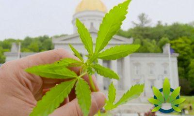 Vermont Statehouse Garden Flower Beds Found with Nearly Three Dozen Cannabis Plants in Them