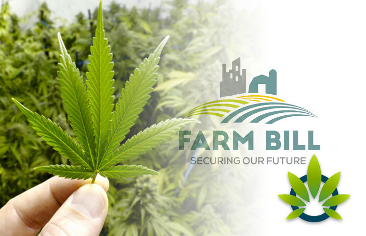 Analyzing the Cannabis Industry and CBD Changes Since the 2018 Farm Bill Pass