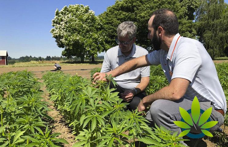 Hemp Farming Sustainability: Are US Hemp Farmer's Practices Setup for Long-Term Durability?