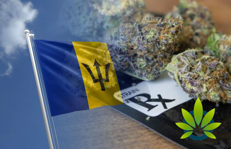 Attorney General in Barbados Pledges to Introduce a Medical Marijuana Bill in Parliament