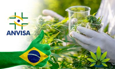 Brazil's Health Regulator, ANVISA, Reveals 10,000+ Authorizations Granted to Patients Since 2014