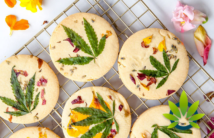 University of Minnesota Study: CBD Absorption Drastically Increases Upon Eating Fatty Food Meals