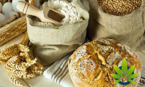 Taking a Look at CBD, Gluten Sensitivities, Allergies and Celiac Disease