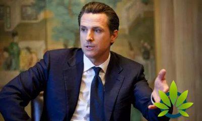 California Rakes in Over $420 Million in Cannabis Tax Revenue, Passing Gov. Gavin Newsom's Forecast