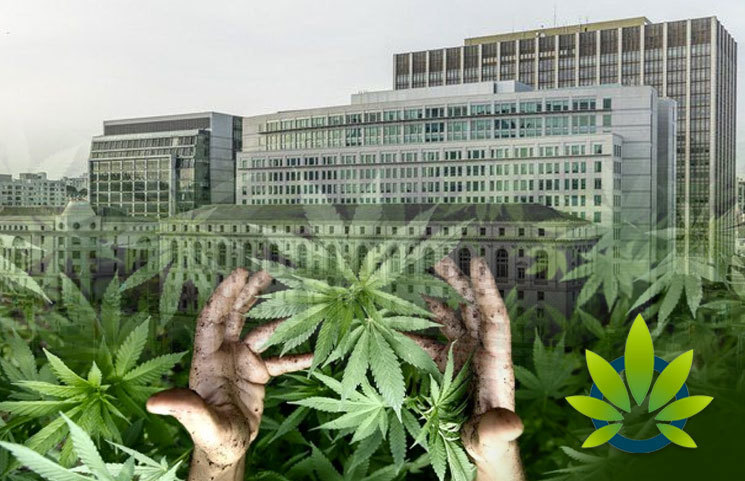 California-Supreme-Court-Ruling-Unlikely-to-Disrupt-Cannabis-Industry