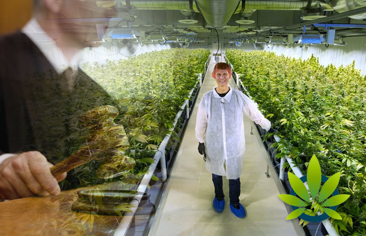 M3 Ventures Cannabis Company Fined $50,000 By Massachusetts Regulators Over Pesticide Use