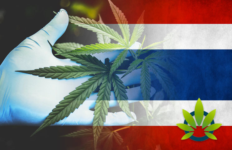 Thailand Converts Seized Cannabis into Medical Marijuana Supply, Over 600,000 Cannabis Oil Bottles Worth