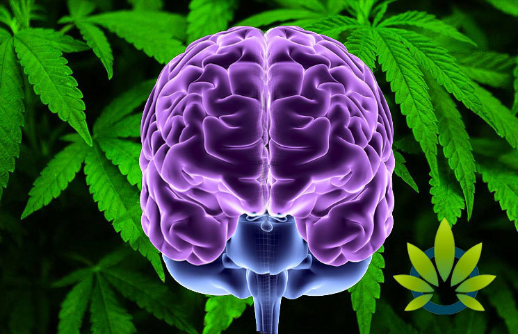 New Drug and Alcohol Dependance Study on Cannabis Use in Teenagers and Brain Structure