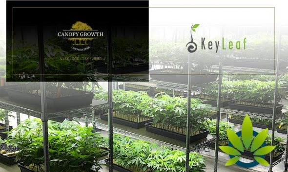 Canopy Growth's Subsidiary, KeyLeaf Life Sciences, Acquires Health Canada License for Extraction Facility