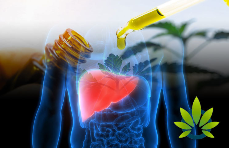 University of Arkansas for Medical Science Studies Connection of Chronic CBD Use and Liver Cancer