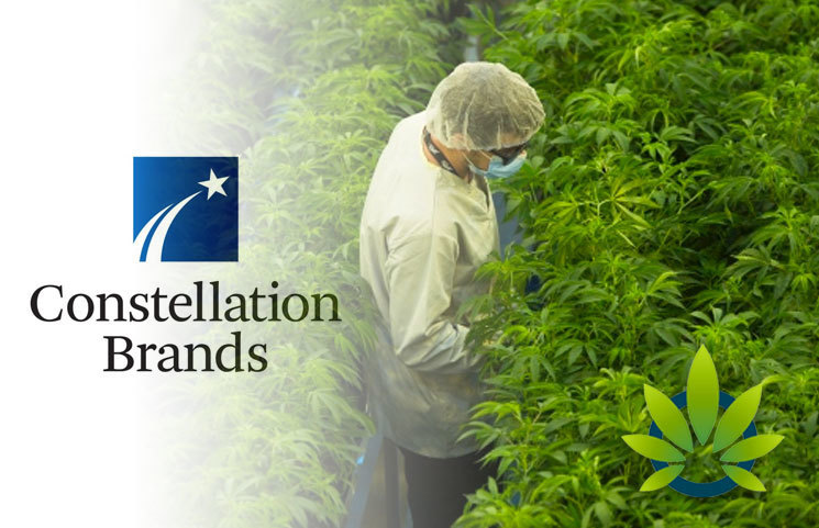 Constellation-Brands-Predicts-Losing-Over-50-Million-Towards-Its-Canopy-Growth-Investment