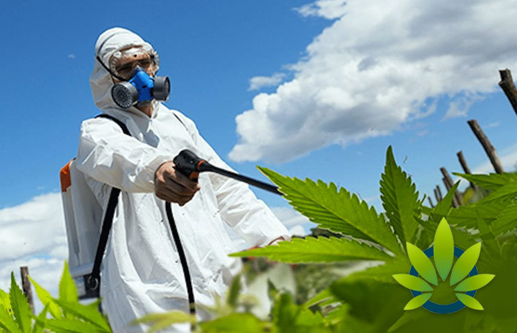 EPA-to-Review-Pesticide-Applications-for-Hemp