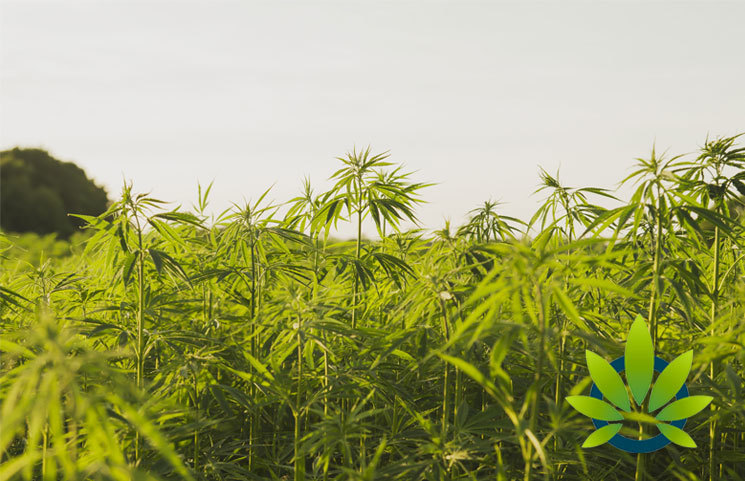 Four Things Cannabidiol Companies Should Consider When Drafting a Hemp CBD Contract