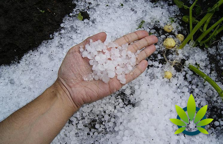 Hailstorm-Hits-Oregon-Hemp-Crops-and-Causes-Potentially-25-million-in-Damage
