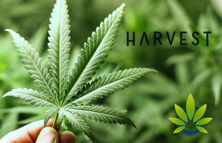 Harvest Health and Recreation Raises $225 Million in a Bid to Expand Cannabis Supply Chain Assets