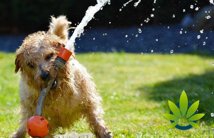 HempMeds-Celebrates-National-Dog-Day-with-Its-Hemp-Focused-Pet-Line