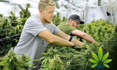 How-to-Land-a-Job-in-the-Cannabis-Industry