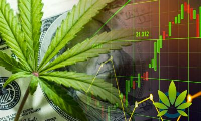 Is It Safe to Invest in Cannabis-Based Stocks? A Look at the Weed Market