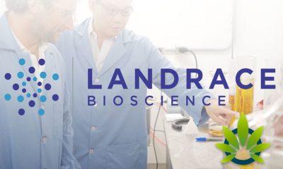 Landrace Bioscience Will Bring 350,000 Pounds of Hemp into Wholesale Customer Products