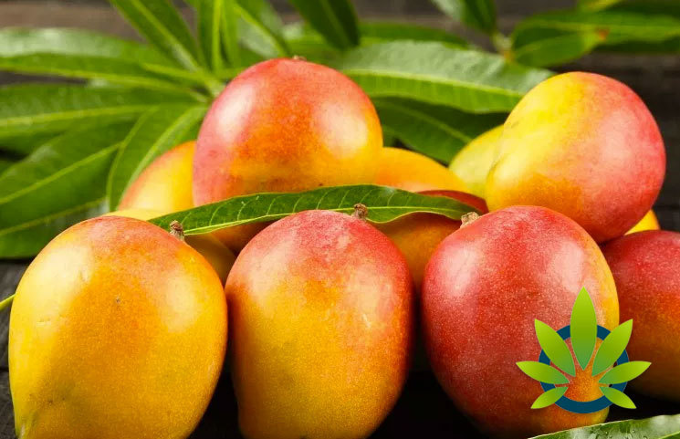 Will Eating Mangoes Enhance a Cannabis High? How the Fruit Helps Smoking Marijuana's Effects