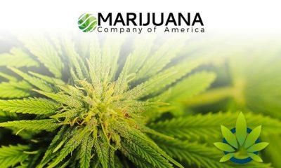 Marijuana Company of America Provides Latest Details on Reverse Stock Split