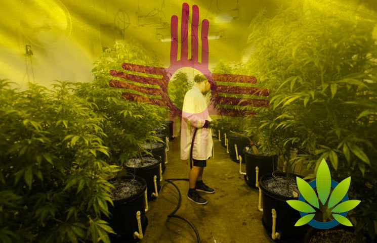 Licensed Medical Marijuana Growers in New Mexico Now Capped to 1,750 Plants, a 30% Drop