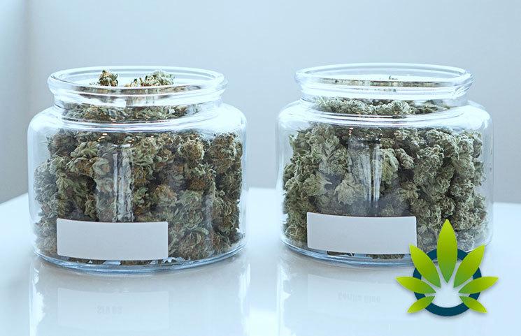 Medical Marijuana vs Recreational Marijuana: What's the Difference?