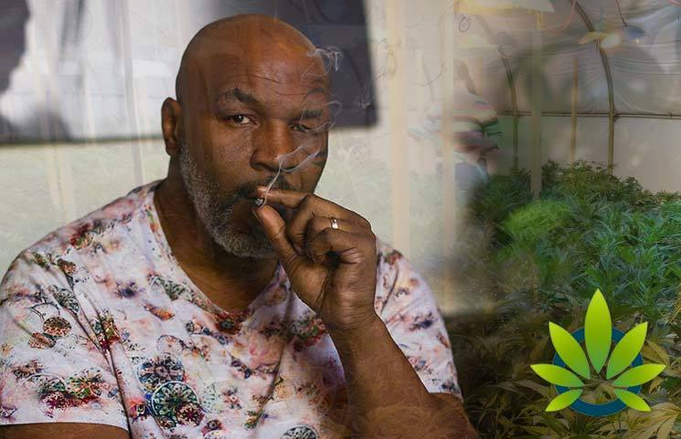 Mike Tyson Reveals He Smokes $40,000 of Weed a Month on His Hot Boxin' Podcast with Jim Jones