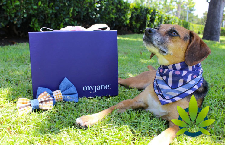 MyJane and CUDDLY Launch First CBD Box 'Time to Paws' for Pets and Pet Parents