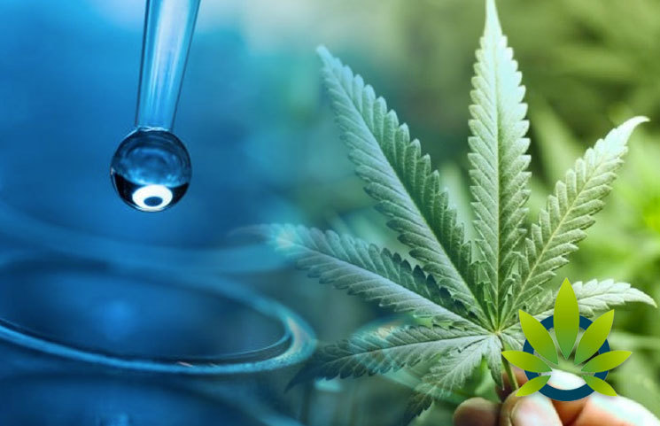 Nanotechnology and Cannabis