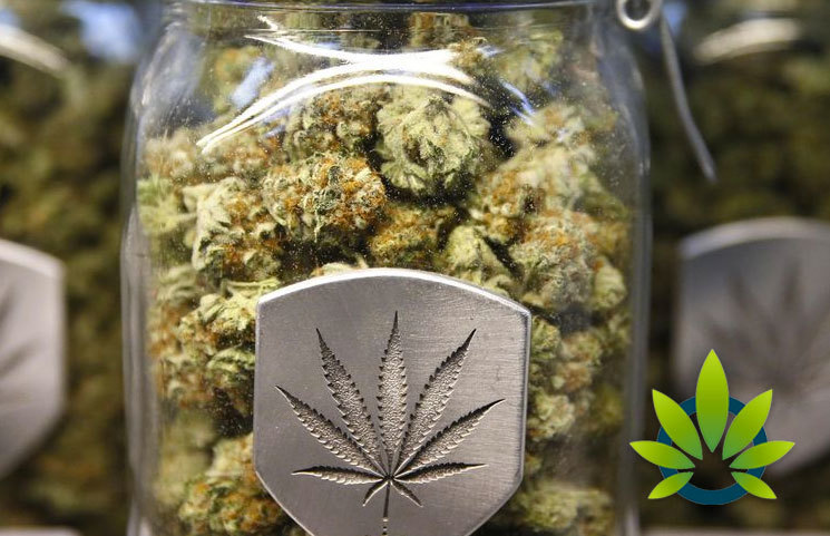 Nevada-to-Surpass-Californias-Current-Reign-Within-the-Marijuana-Industry