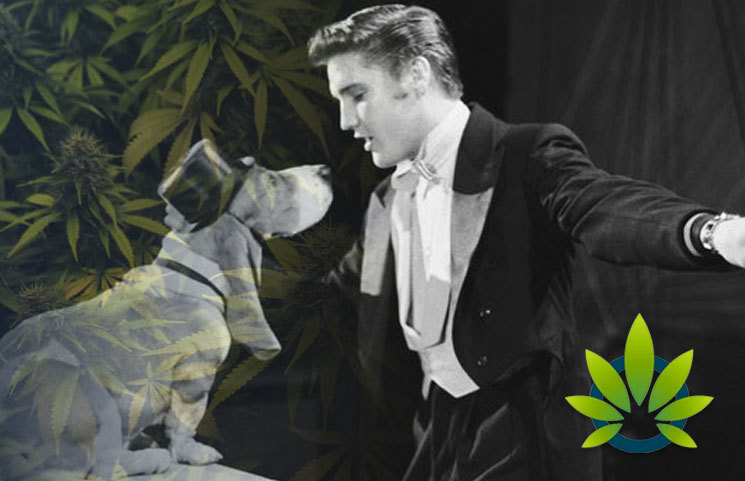 New Elvis Presley Hound Dog CBD-Infused Pet Products Launch by Better Choice Company and ABG
