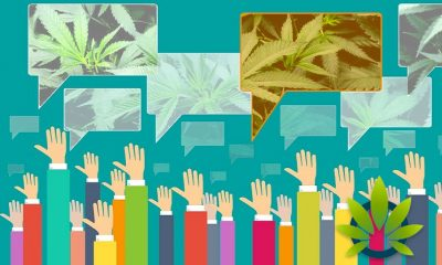 New Investor's Business Daily and TIPP Poll: Over 60% of Americans Support Cannabis Legalization