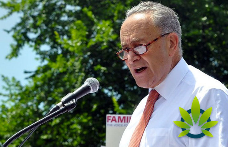 New York Senate Minority Leader: Industrial Hemp Germplasm Repository at Cornell University is Starting