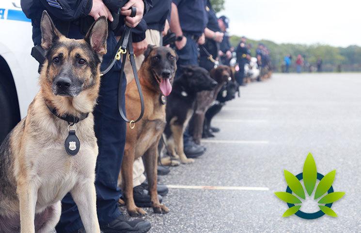Ohio Highway Patrol and Columbus Division of Police Suspend Police Dog Marijuana Detection Training