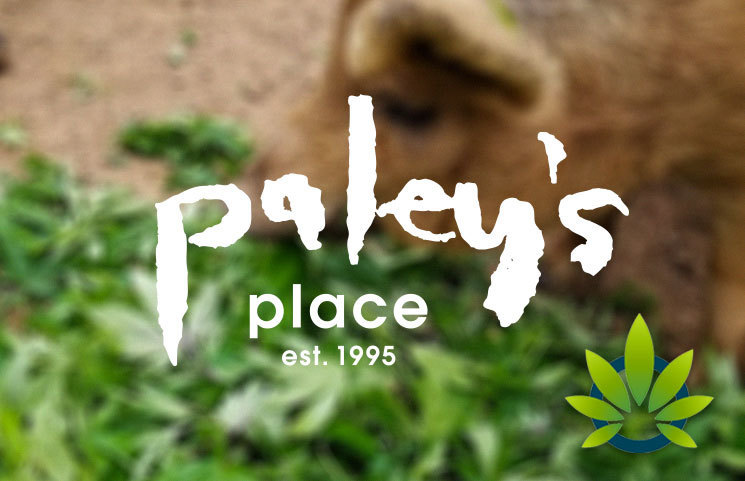 Paley's Place Bistro and Bar Serves Cannabis-Fed Pigs in Portland, Oregon
