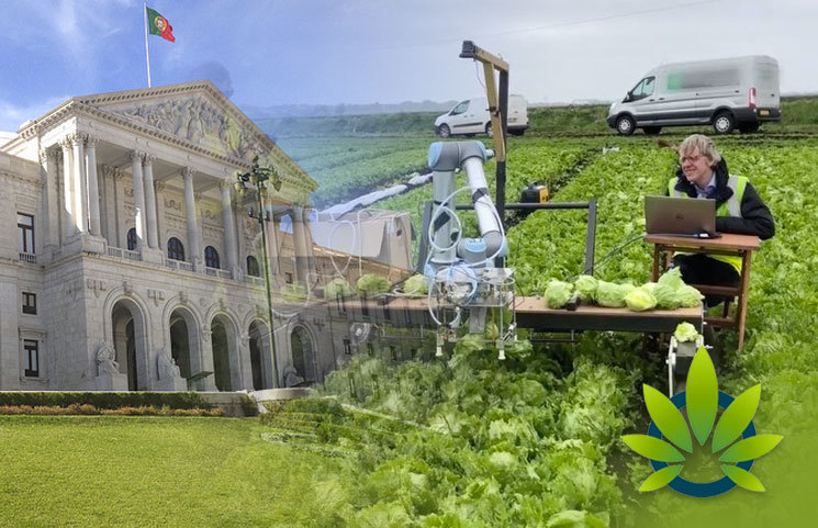 Portuguese Government Under Heat from Hemp Farmers as Growers Intend to Sue Authorities