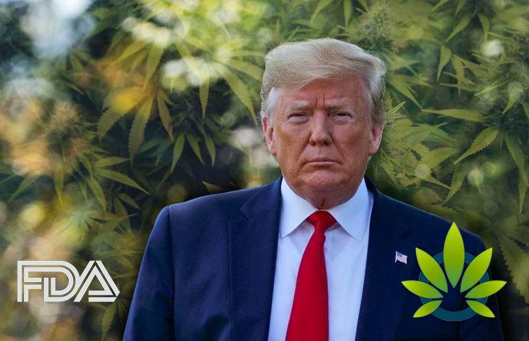 President Trump Administration, FDA Seek More Public Feedback on Global Marijuana Reclassification
