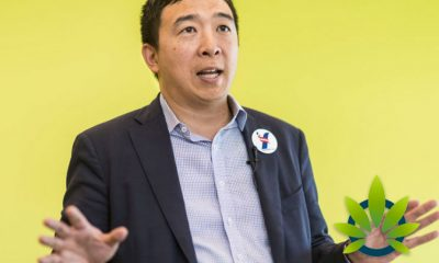 Presidential Candidate Andrew Yang Supports Legalization of Cannabis