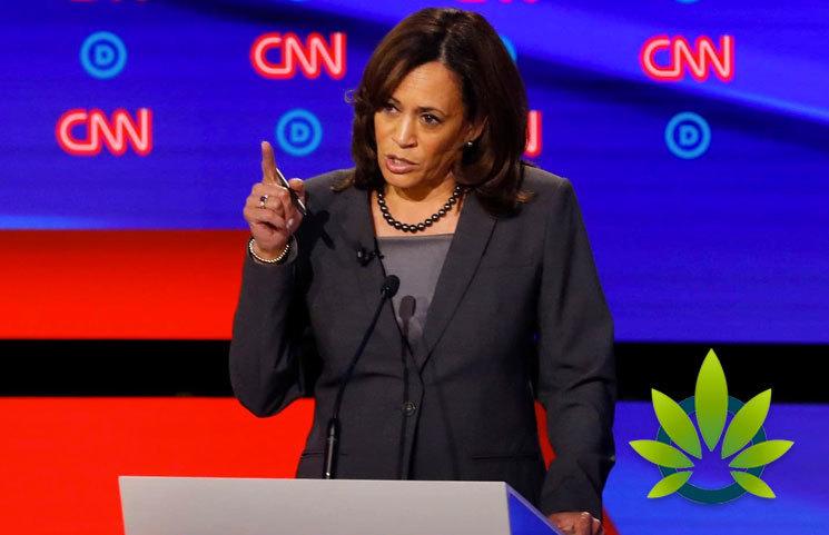 Tulsi Gabbard Attacks Senator Kamala Harris's Record on Marijuana Convictions and Criminal Justice