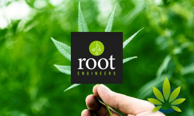 Root Engineers Celebrates Approved License to Extend its Cannabis Services to Michigan