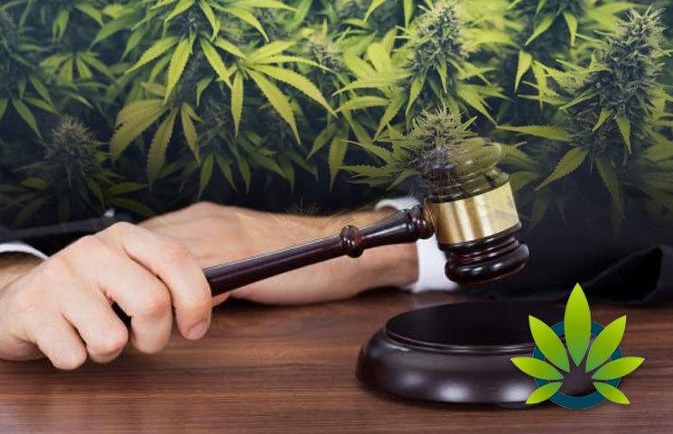 Senator-Initiates-New-Legislation-for-Federal-Research-on-Cannabis
