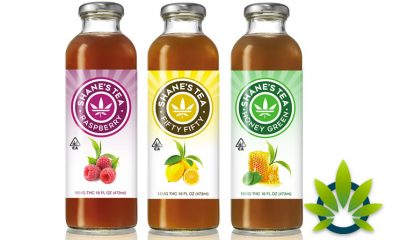 Shane's Tea: Natural Organic Cannabis Oil Tea Blends with Multiple Flavors