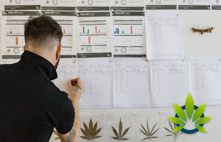 Thailand University Plans New Undergraduate Study Program Focusing on Cannabis Development
