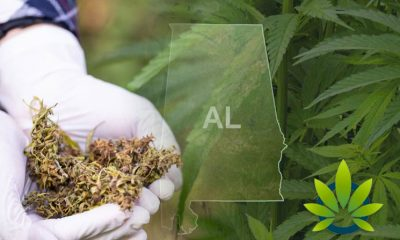 Medical Cannabis Study Commission Shares Support for Medical Marijuana Use in Alabama