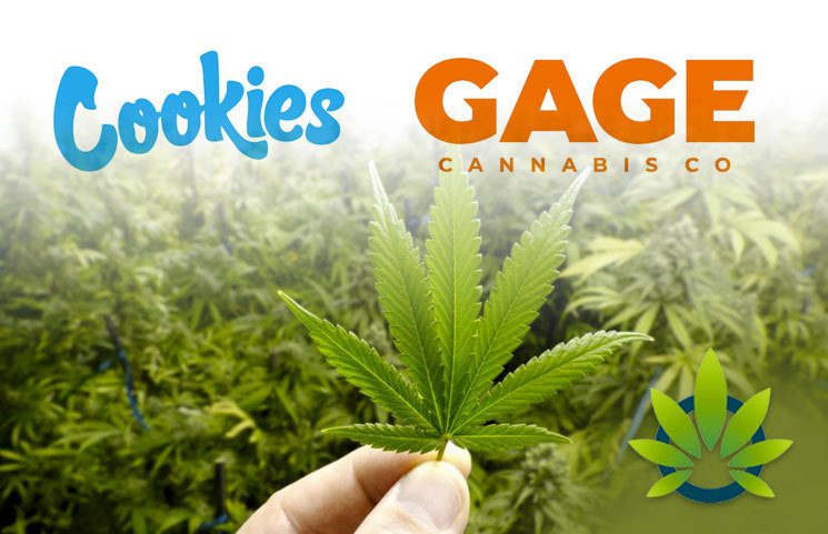 Top-Selling Marijuana Brand, Cookies, Partners with Gage Cannabis for Expansion Purposes