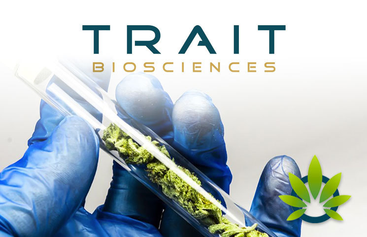 Trait Biosciences' New Amplified Cultivation Technology Multiples Production of CBD In Hemp and Cannabis