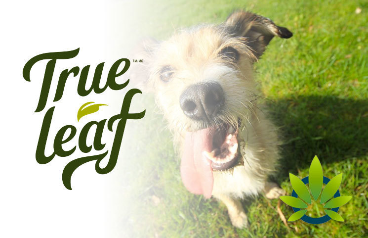 True Leaf Brands Set to Release True Leaf Pet's CBD Dog Supplements, Shares Q1 Financial Reports